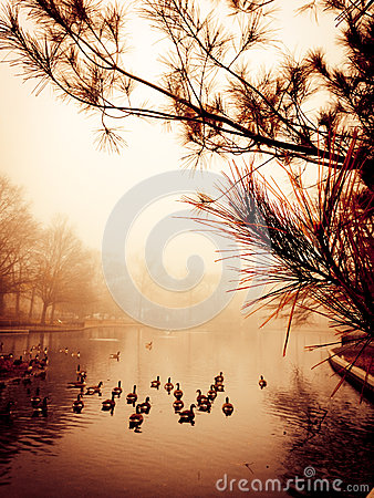 Free Peaceful Pond Royalty Free Stock Photography - 28009617