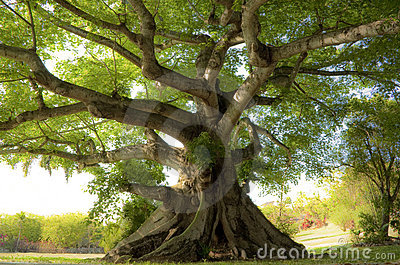 Peaceful Tree Royalty Free Stock Images - Image: 14352949