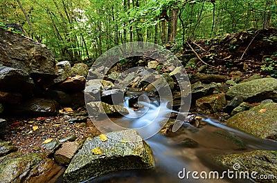 Peaceful Woodland Stream