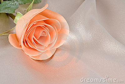 Peach Colored Rose on Beige Satin Background