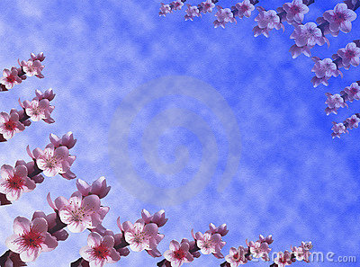 Peach flowers background