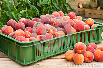Peach fruits