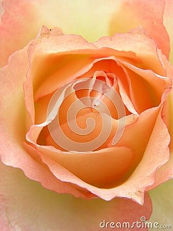 Free Peach Heart Stock Photos - 152853