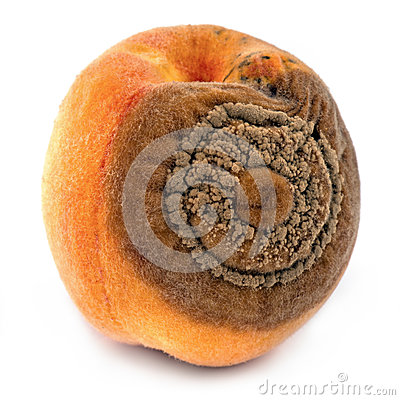 Peaches disease, monilia fructigena