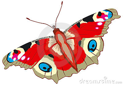 Peacock butterfly,  Inachis io, vector