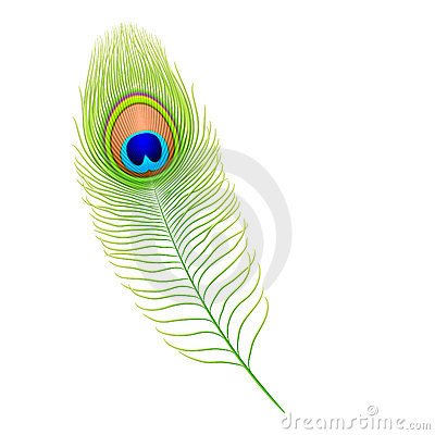 Free Peacock Feather Stock Photo - 11993460