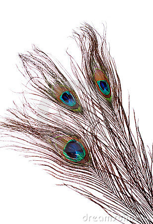 Free Peacock Feather Stock Photo - 1660430