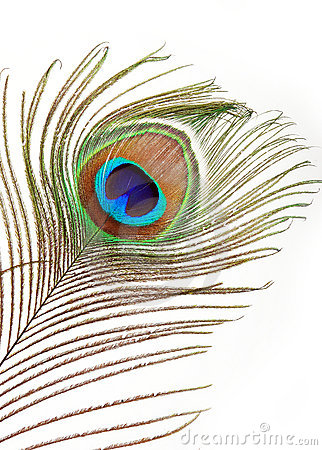 Free Peacock Feather Stock Photo - 8176910