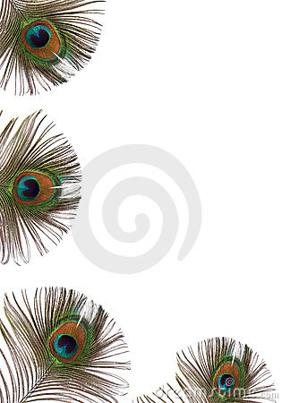 Free Peacock Feather Beauty Royalty Free Stock Image - 4097416