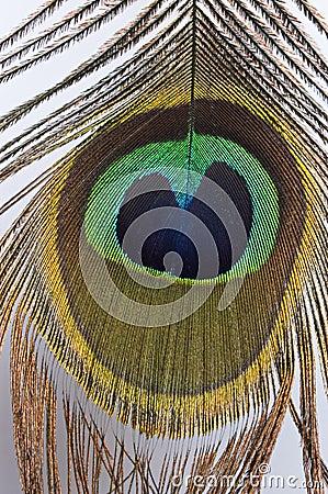 Peacock Feather Eye