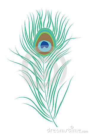 Free Peacock Feather Isolated Vector Illustration Stock Photography - 78251962