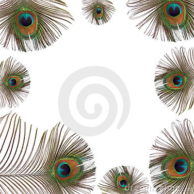 Free Peacock Feathers Stock Photography - 6208482