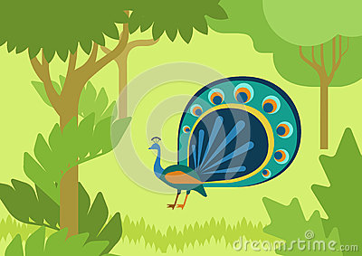 Peacock flowing tail flat design cartoon vector wild animal bird