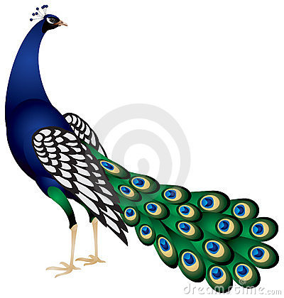 Free Peacock In Stock Photography - 18894362