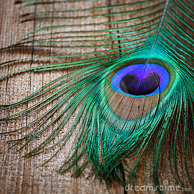 Free Peacocks Feather  On Wooden Board Stock Photography - 22893282
