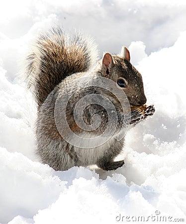 Peanut Muncher