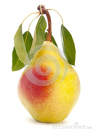 Pear fruit with leaf