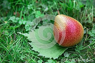 Pear on green leaf