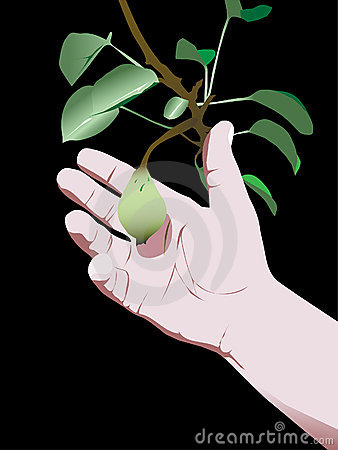 Pear hand