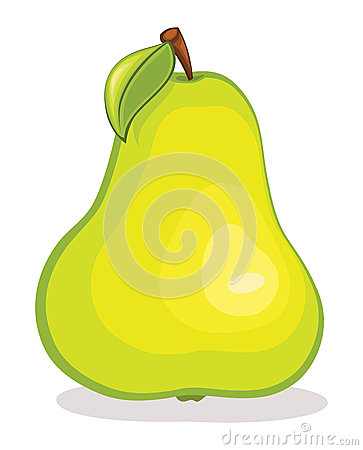 Pear vector illustration
