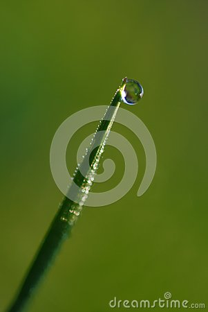Pearl of dew