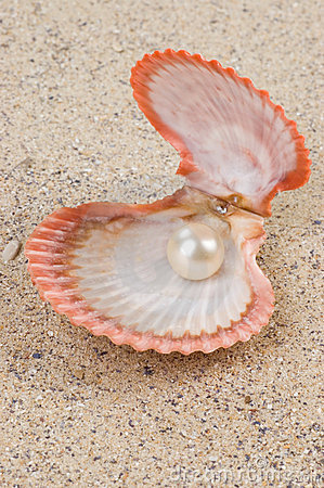 Free Pearl In Shell Royalty Free Stock Photos - 4459008