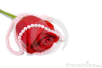 Pearl necklace over the red rose