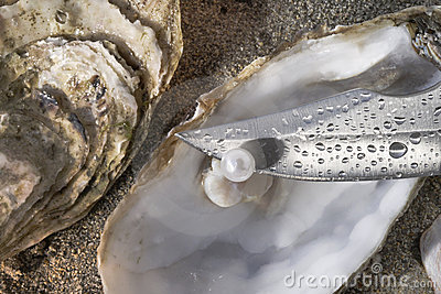 Pearl oyster and blade