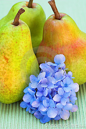 Pears and flower