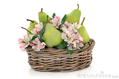 Pears and Flower Blossom