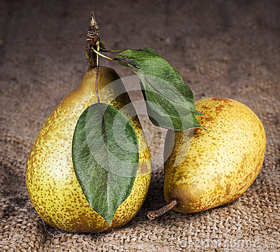Pears still life country