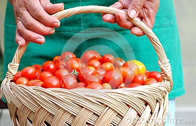 Peasant holding a basket with cherry tomatoes