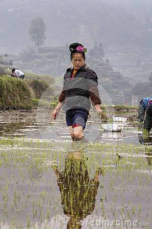 Peasant Woman standing of ankle-deep mud, in the middle ricefield. Editorial Stock Photo