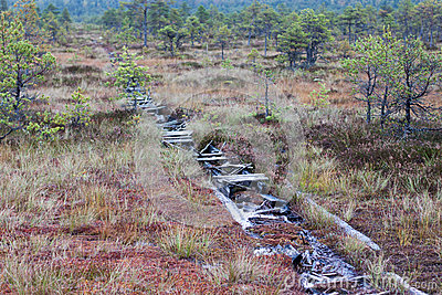 Peat bog swamp Europe