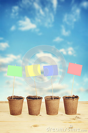 Peat pots with paper nameplates on sticks against blue sky