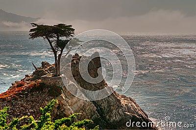 Pebble Beach Lone Tree