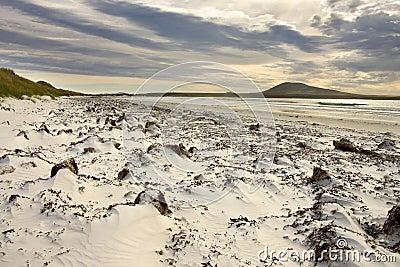 Pebble Island in Falkland Islands