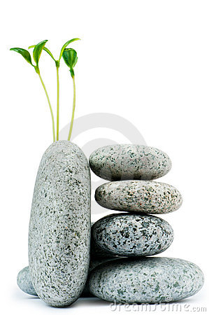 Free Pebbles And Seedlings Royalty Free Stock Photos - 19280308