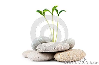 Pebbles and seedlings - alternative medicine