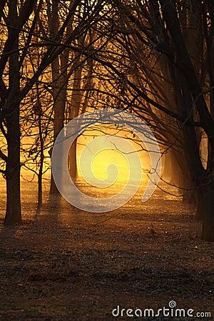 Free Pecan Sunset Royalty Free Stock Image - 3497236