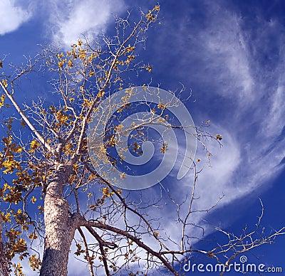 Free Pecan Swirl Stock Images - 215264