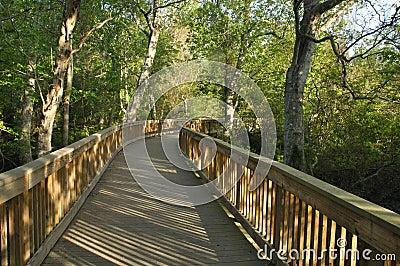 Pedestrian bridge in forest