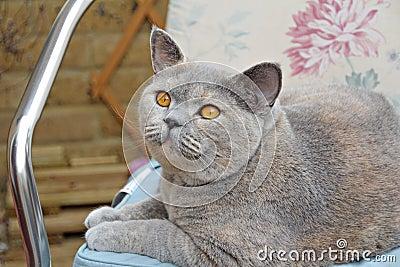 Pedigree cat on seat