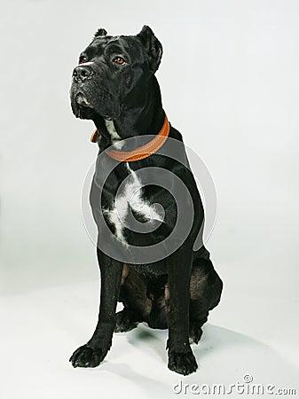 Free Pedigree Dog Stock Image - 1650321