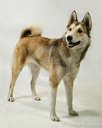 A pedigree dog