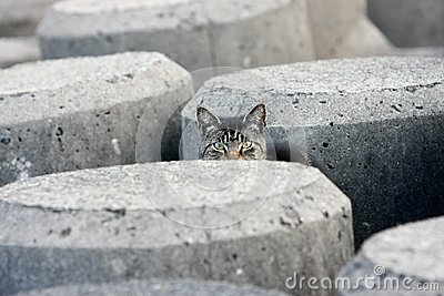 Peek-a-boo stray cat in concrete blocks
