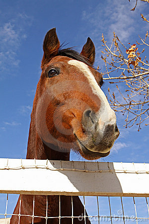 Peeking Over the Fence