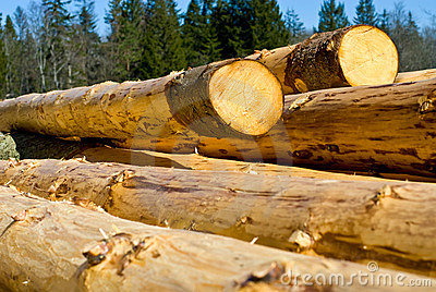 Peeled Logs