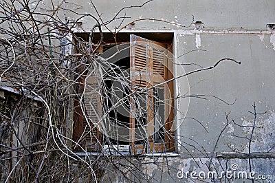 Peeling wall and broken window shutter