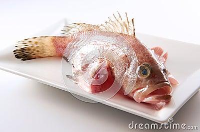 Peixes crus